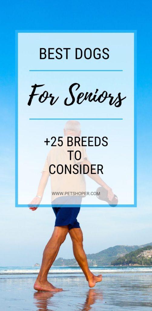 Best Dogs For Seniors pin