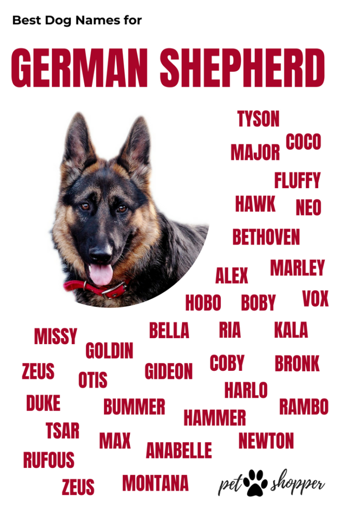 german shepherd names infographic