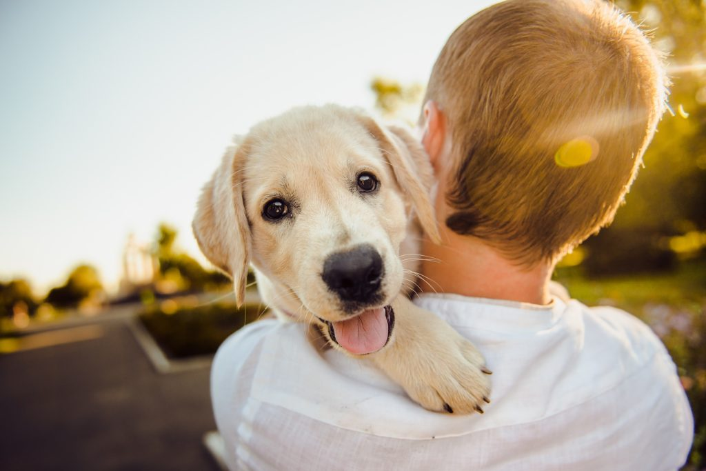 Why Dogs Are Good For Your Health pin