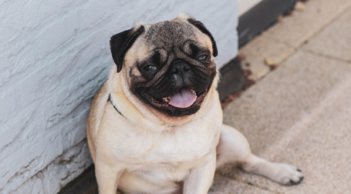 Best Food For Overweight Dogs