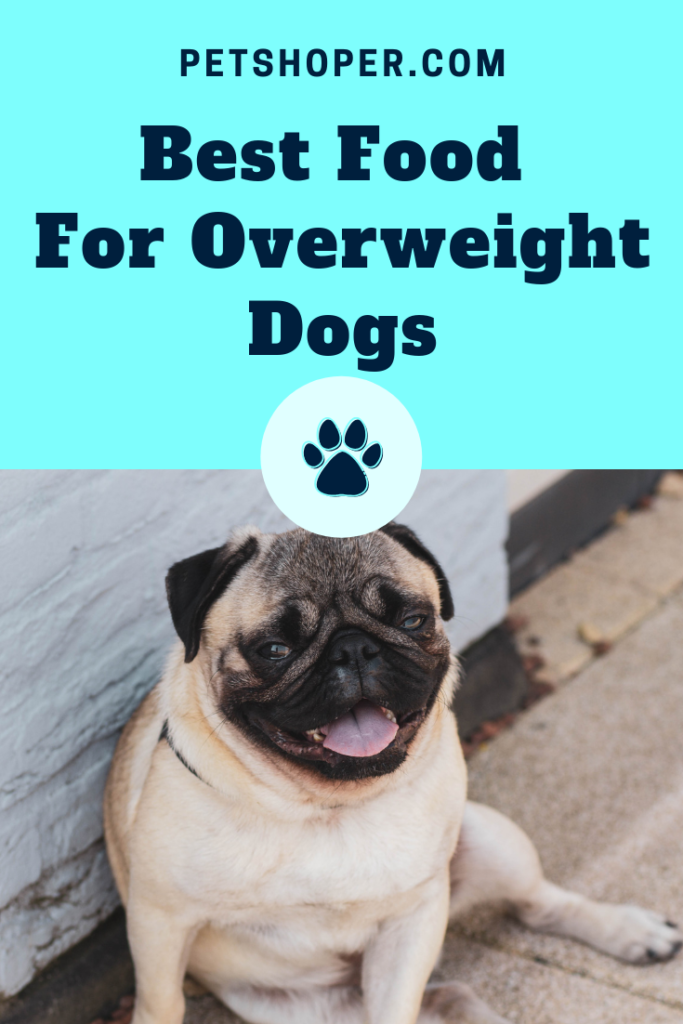 Best Food For Overweight Dogs Pin