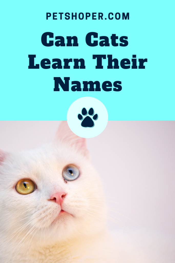 Can Cats Learn Their Names pin
