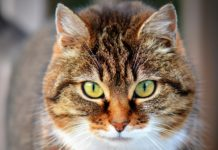 Average Lifespan Of An Outdoor Cat