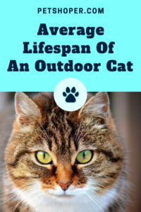 Average Lifespan Of An Outdoor Cat pin