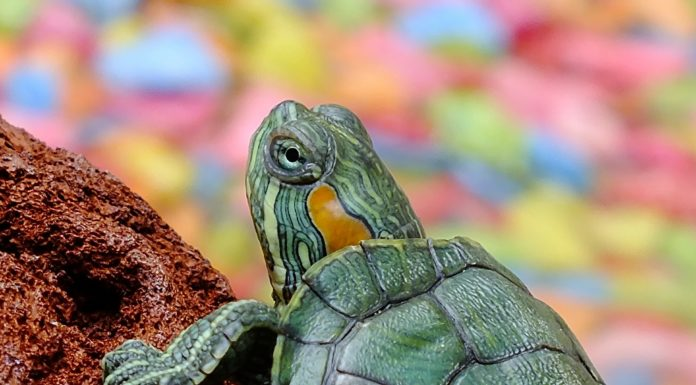 Names for Pet Turtles