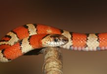 What are the cutest snake breeds?