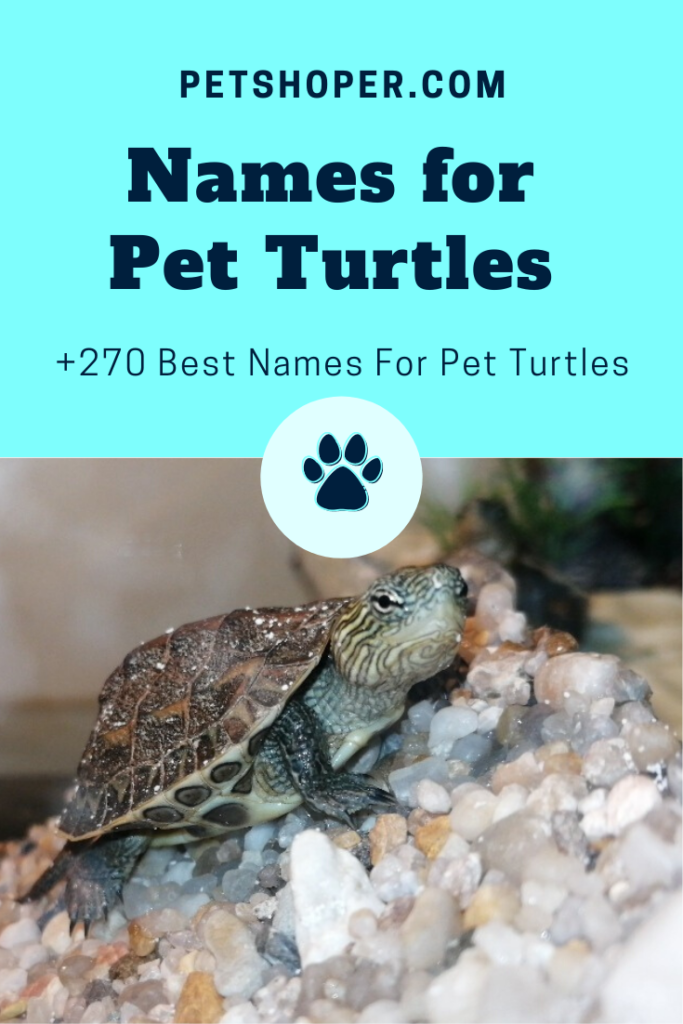 names for pet turtles pin