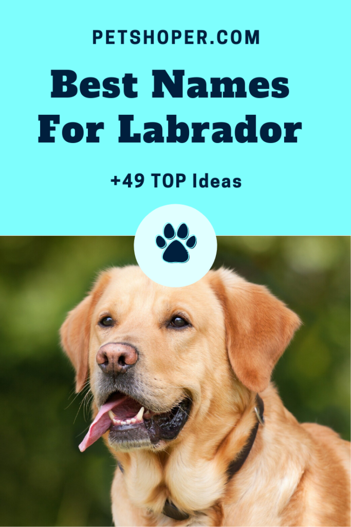 Best Names For Labrador pin