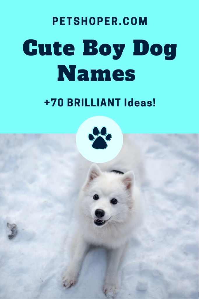 Cute Boy Dog Names pin