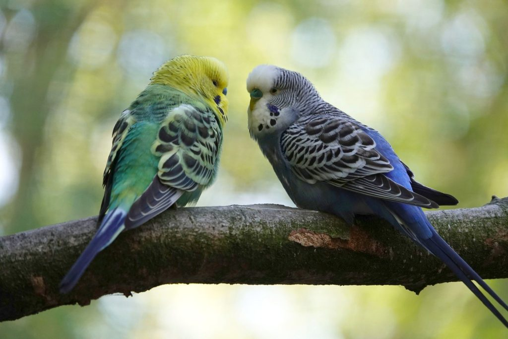 Can Parakeets Eat Cucumber Seeds