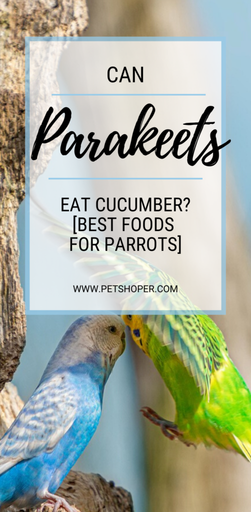 Can Parakeets Eat Cucumber pin