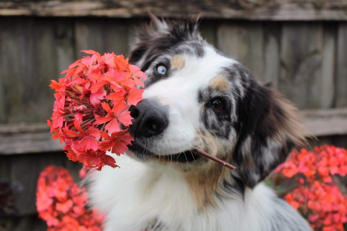 Flower Names For Dogs
