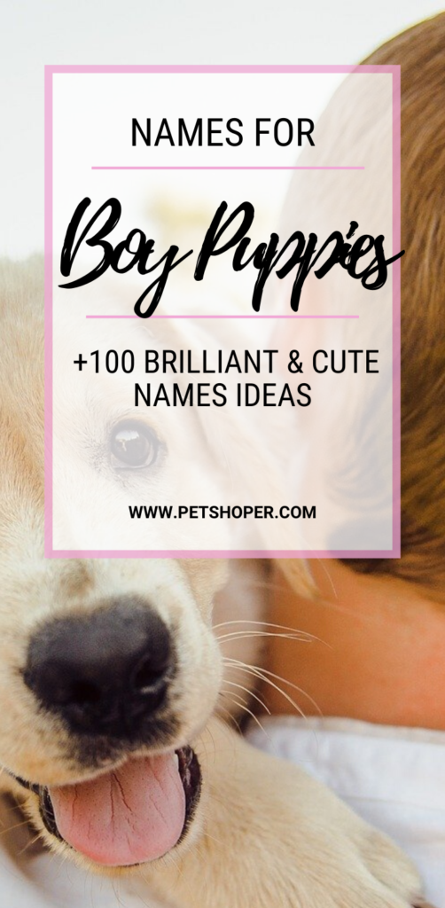 Names For Boy Puppies pin