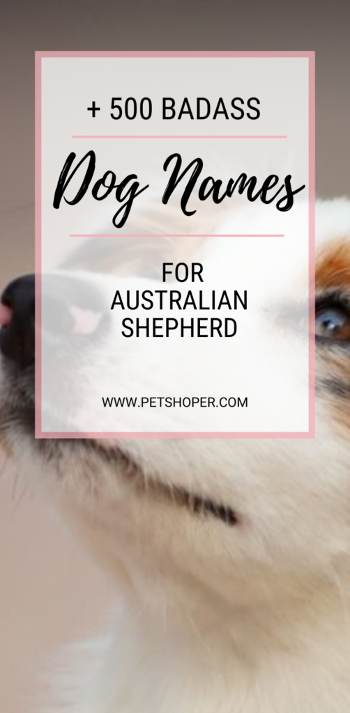 Badass Dog Names For Australian Shepherd pin