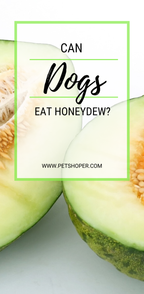Can Dogs Eat Honeydew pin