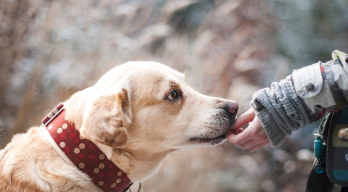 could-sniffer-dogs-be-used-to-identify-coronavirus