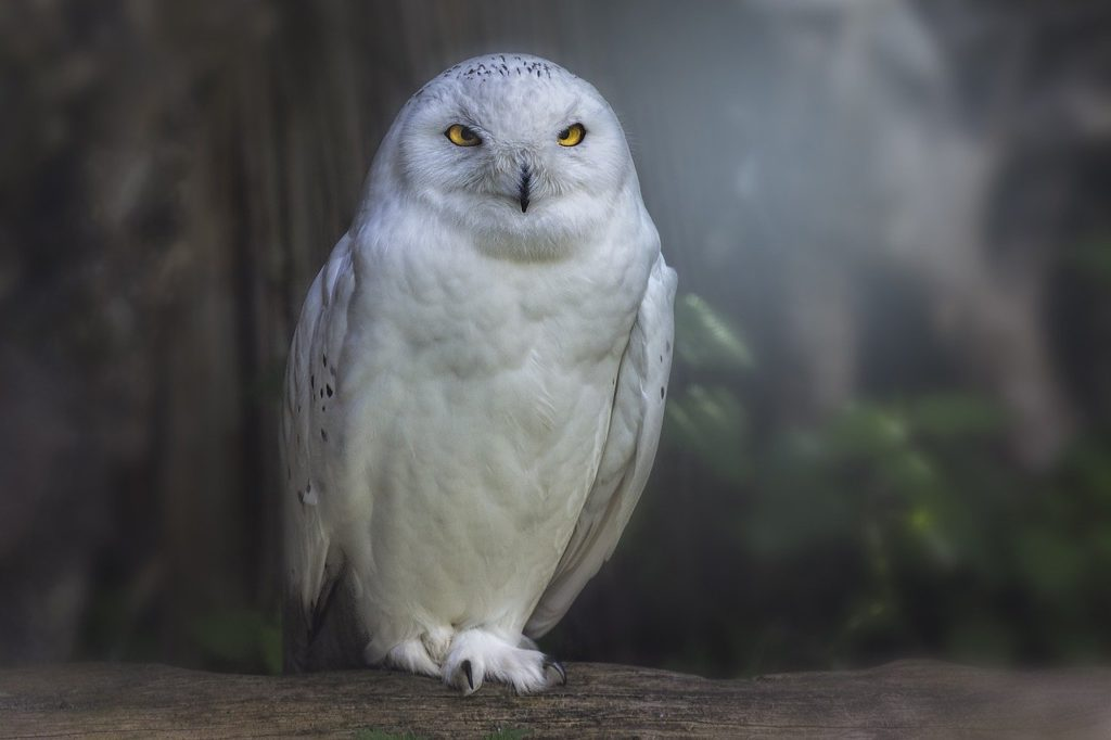 Cool Owl Names