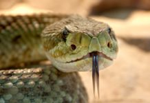 Snakes That Give Live Birth