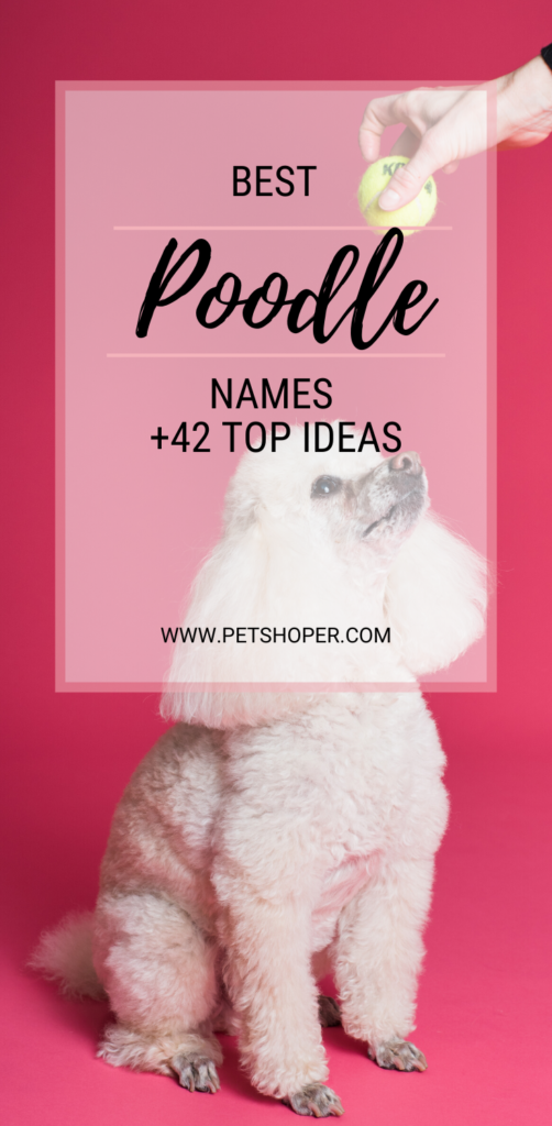 Best Poodle Names pin