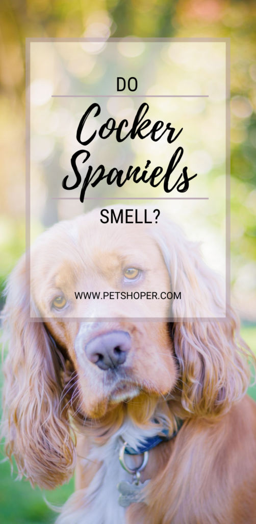 Do cocker spaniels smell pin