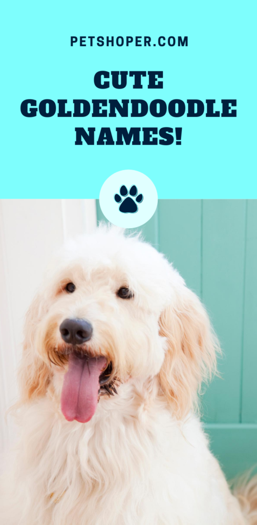 Goldendoodle Names pin
