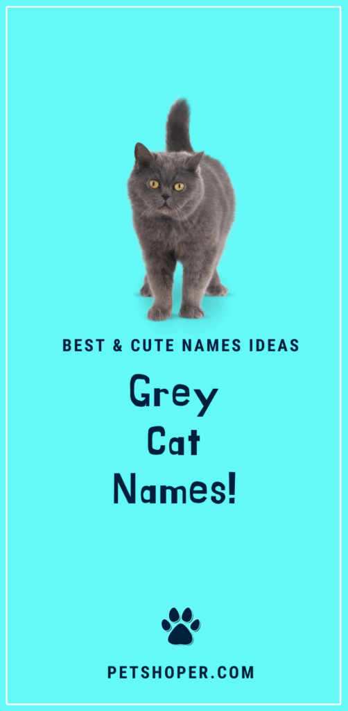 grey cat names pin