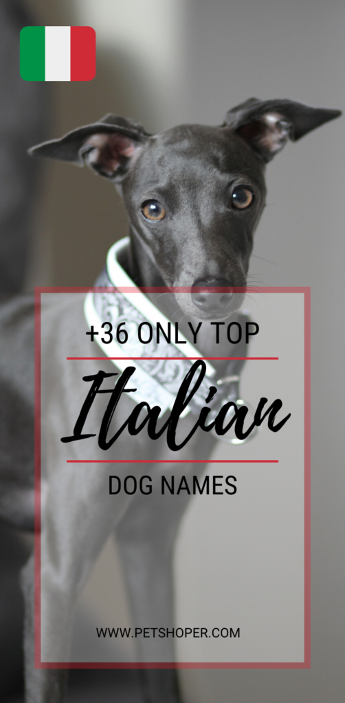 italian dog names pin