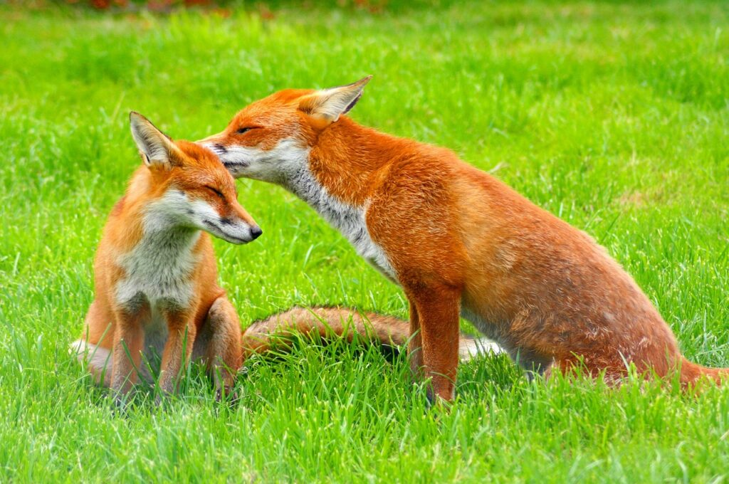Cute Names For Foxes