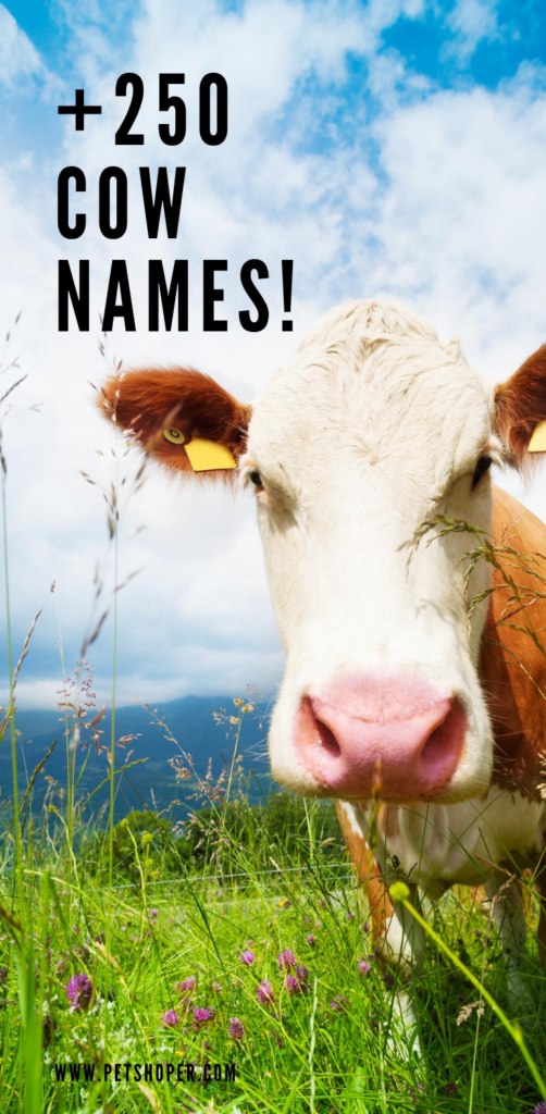 cow names pin