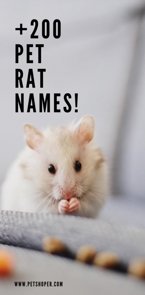 pet rat names