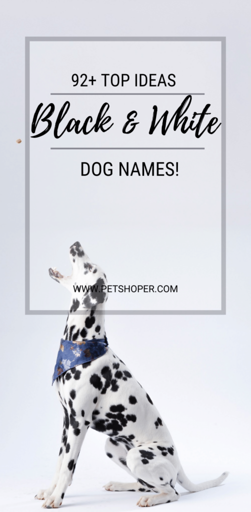 Black And White Dog Names pin