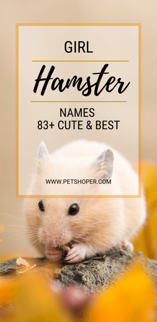 Girl Hamster Names pin