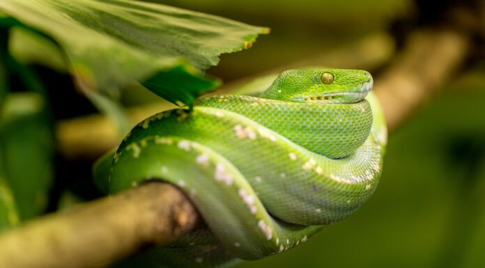 How Intelligent Are Snakes