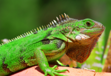 Names For Pet Reptiles