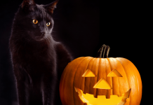 Halloween names for cats