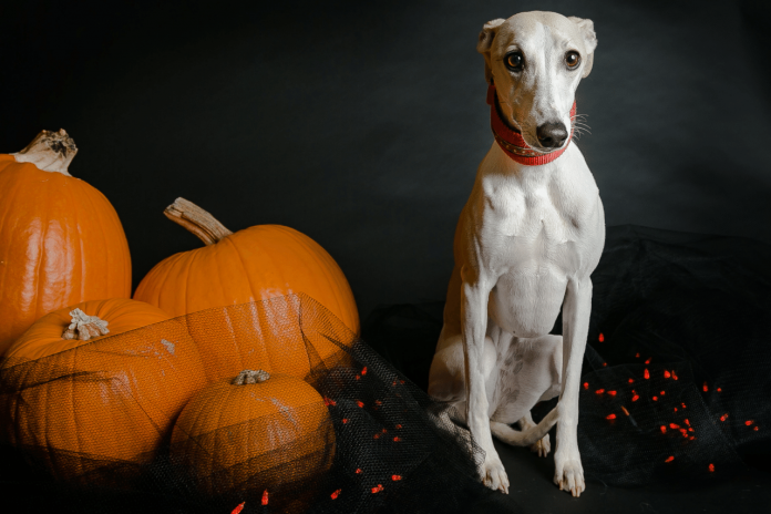 Halloween names for dogs