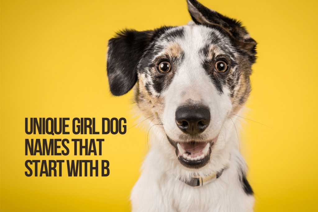 Unique Girl Dog Names That Start With B