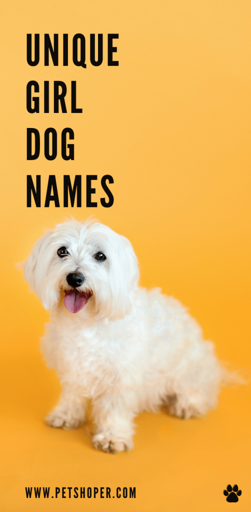 Unique Girl Dog Names pin