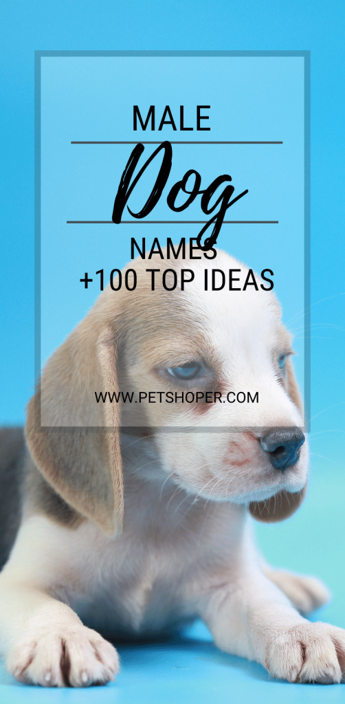 male dog names pin