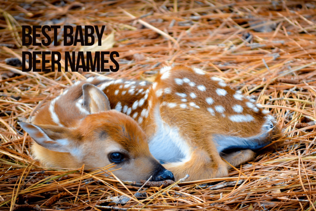 Best Baby Deer Names