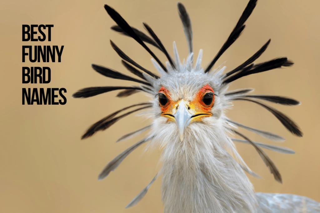 Best Funny Bird Names