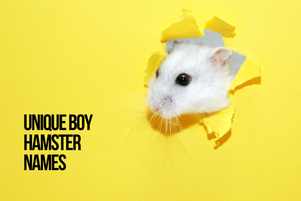 Boy Hamster Names Unique
