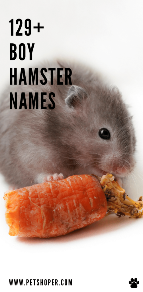 Boy Hamster Names pin