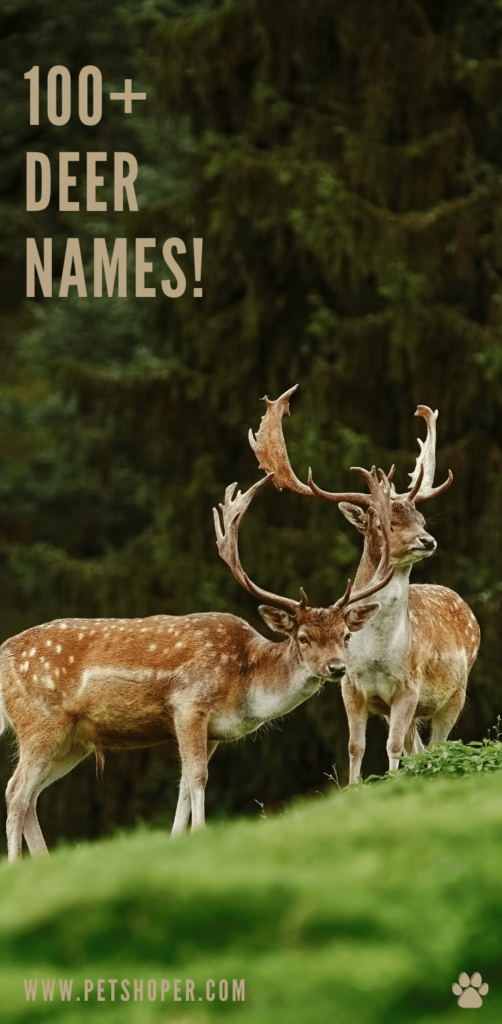deer names pin