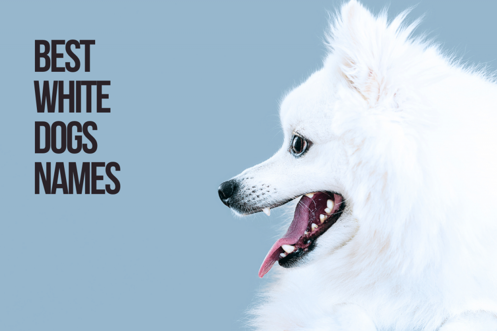 Best White Dogs Names