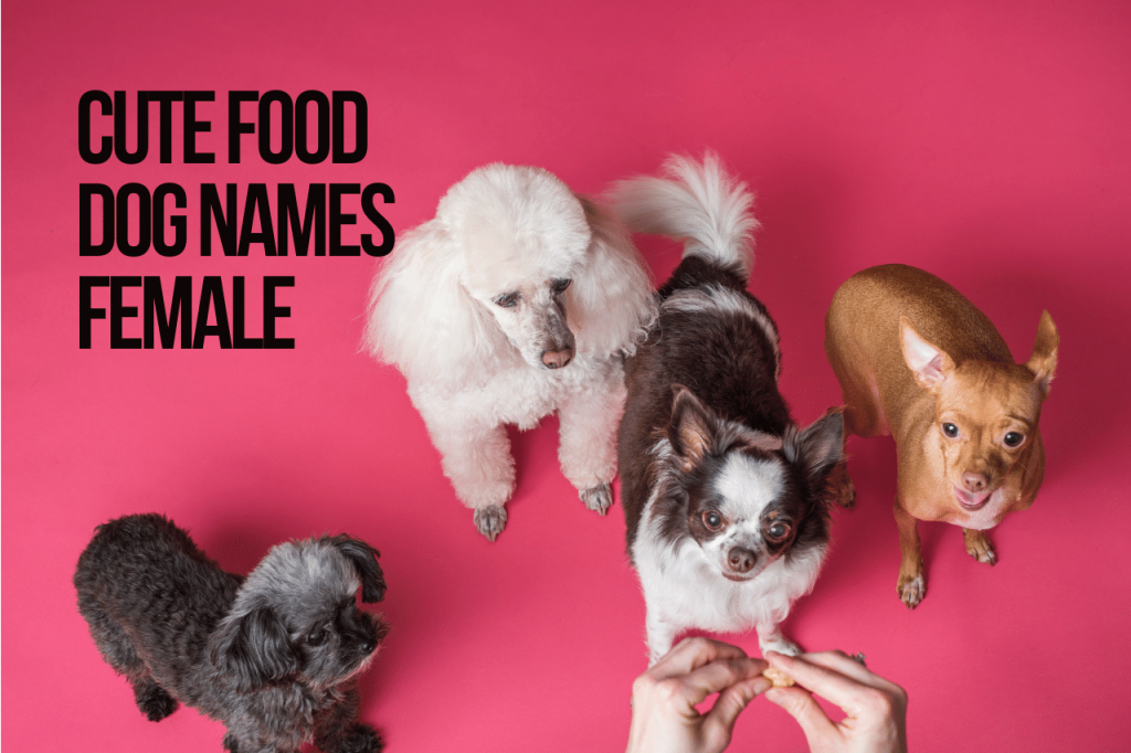 Cute Food Dog Names Female