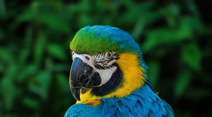 Macaw Parrot Names