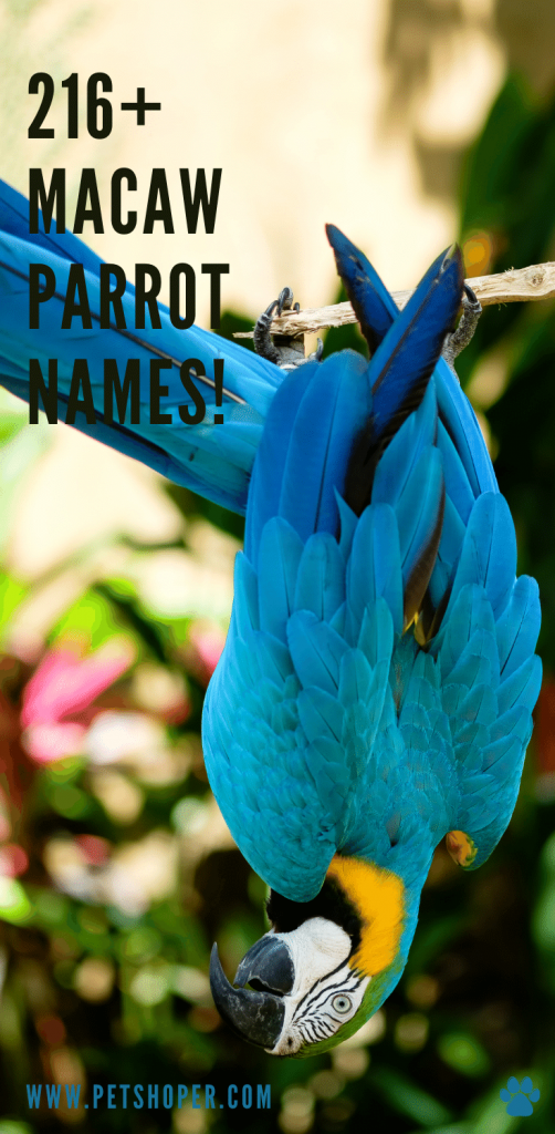 Macaw Parrot Names pin