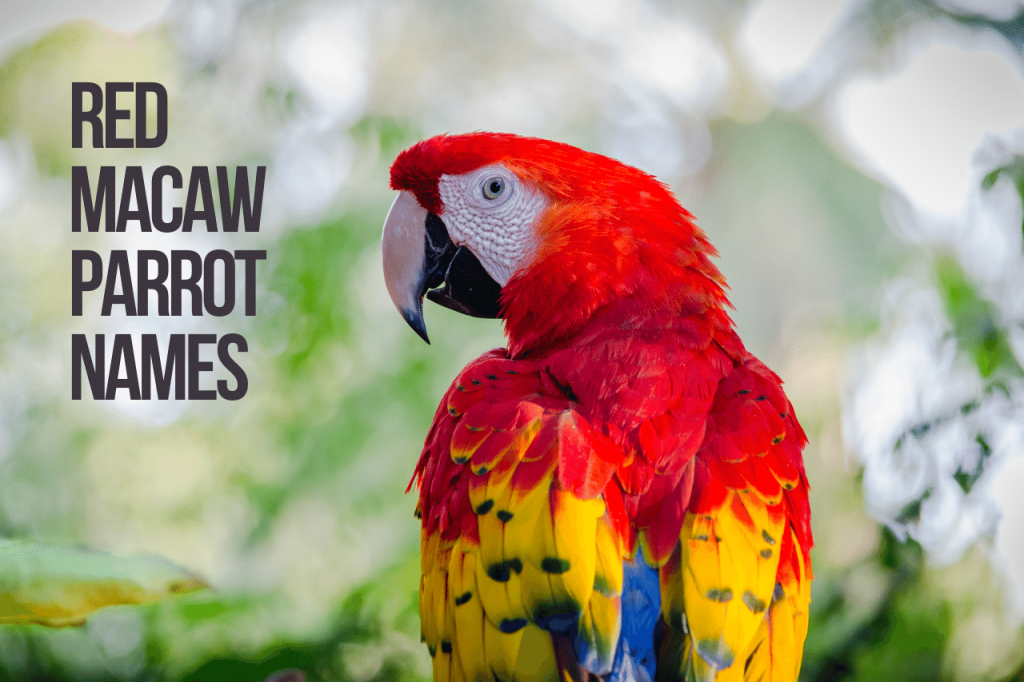 Red Macaw Parrot Names