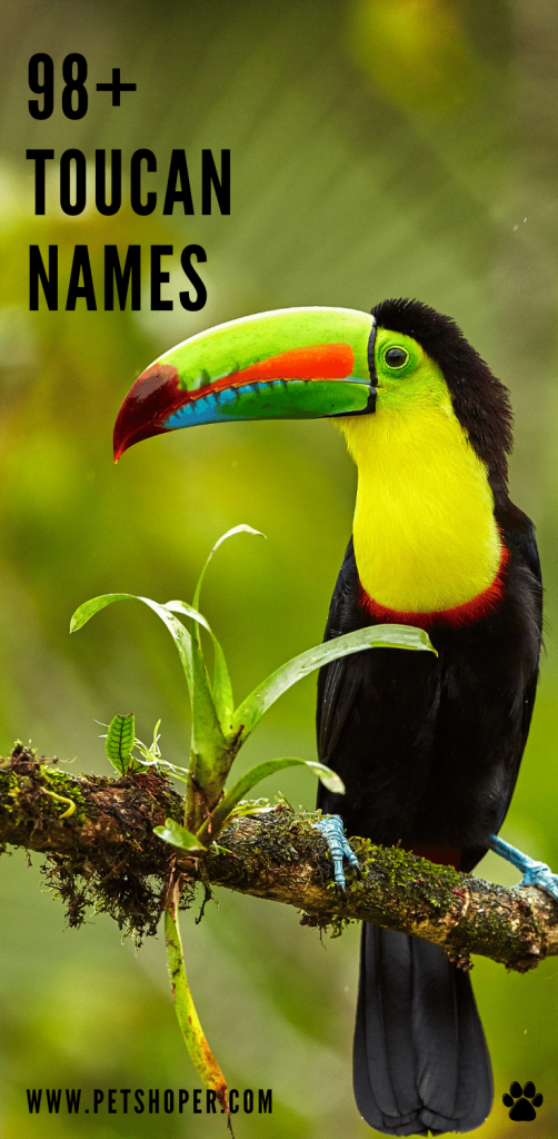 Toucan Names pin